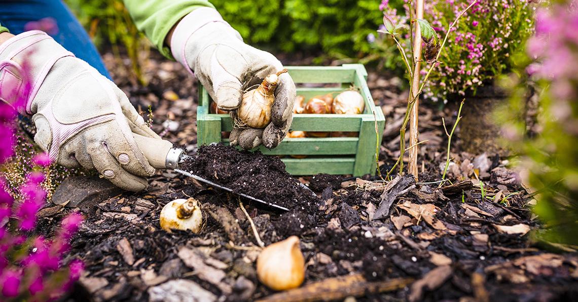 Autumn Gardening Tips